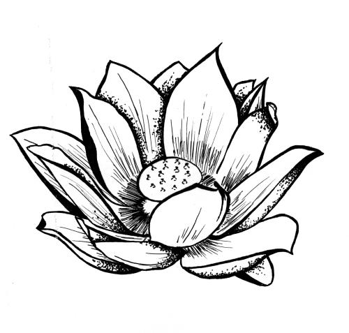 lotus-2.jpeg